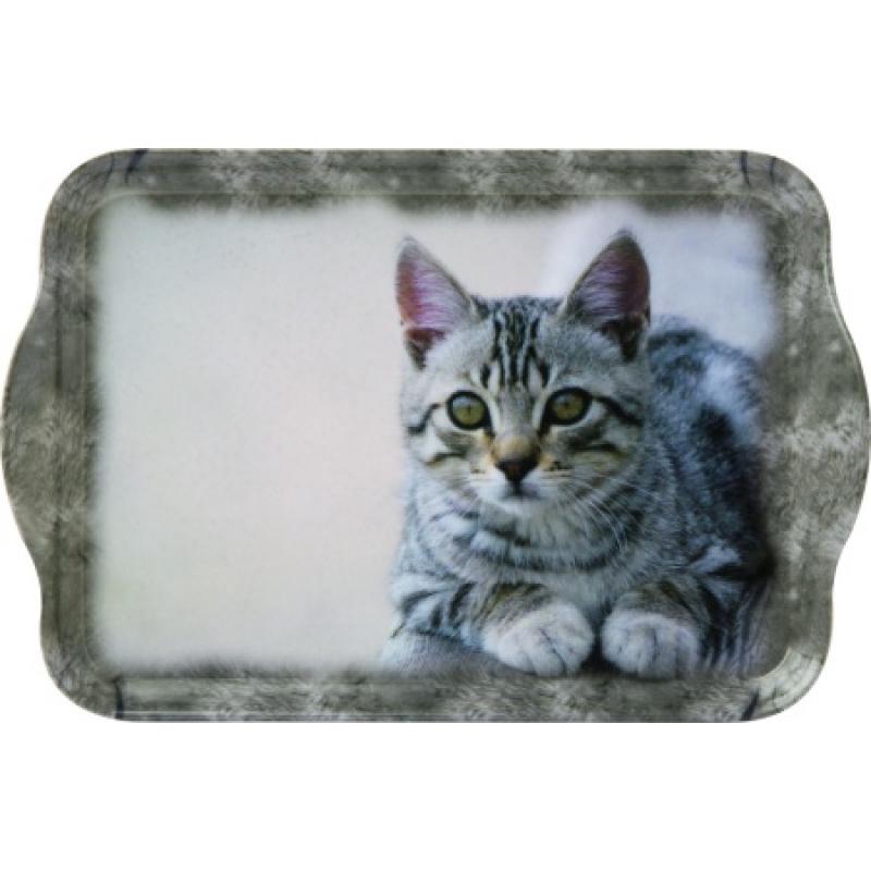 Grau Getigerte Katze Grau Getigerte Katze Cuddly