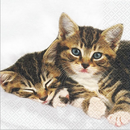 2 Kitties Katzen 33 x 33 cm