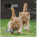 Katzen Kitten  forwards  33 x 33 cm